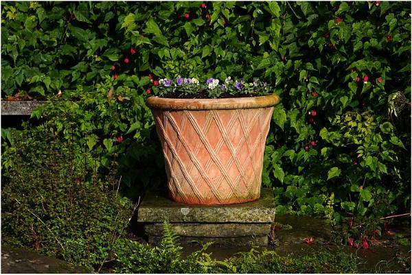 Teracotta Pot by johnriley1uk