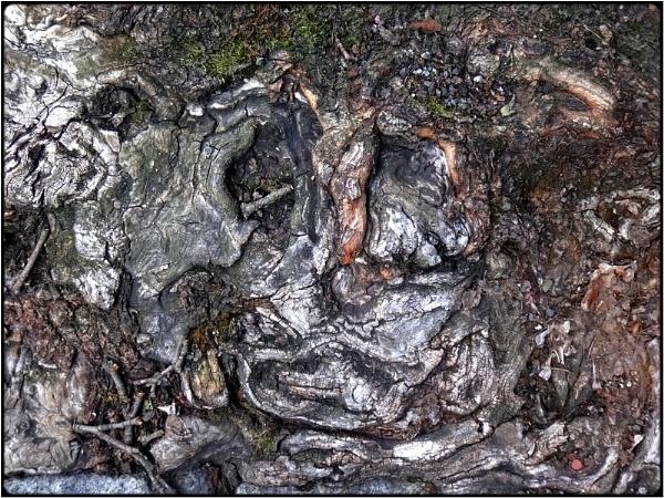a hidden root-skull by FabioKeiner