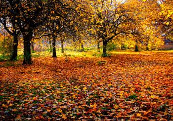 """An Autumn Morning""."