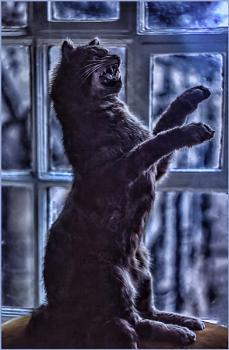 Wild Cat Taxidermy