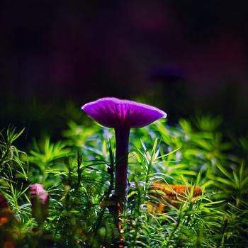 Lonely purple Mushroom