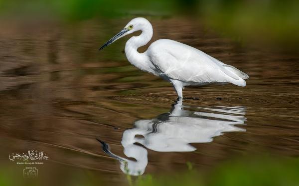 bird by abuelias