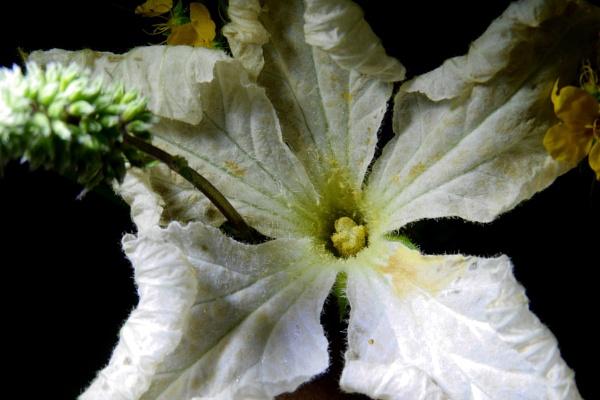 decorative pumpkin flower by elousteve