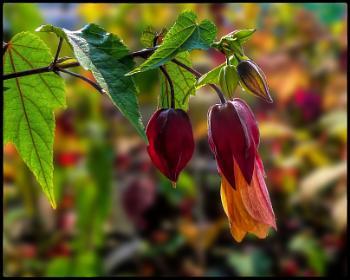 Autumn - The Mellow Season.