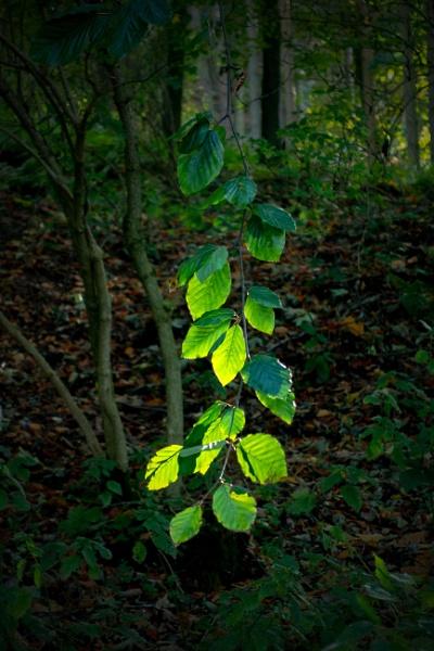 Sunlit Leaves. by terra
