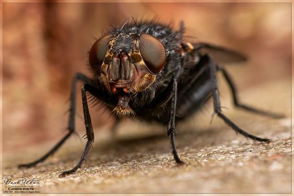 Night fly by Paul_Iddon