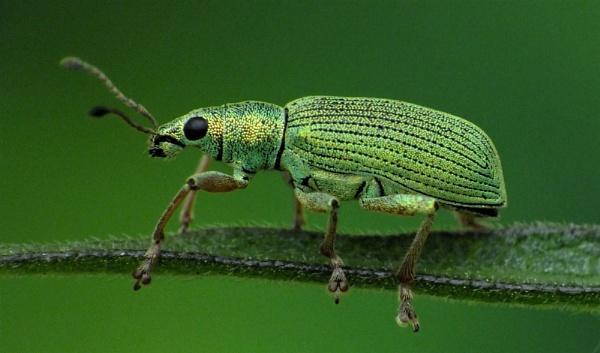 Green Goddess. by spaceguy