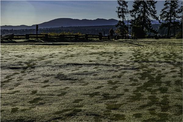 Frosty Morning by Daisymaye