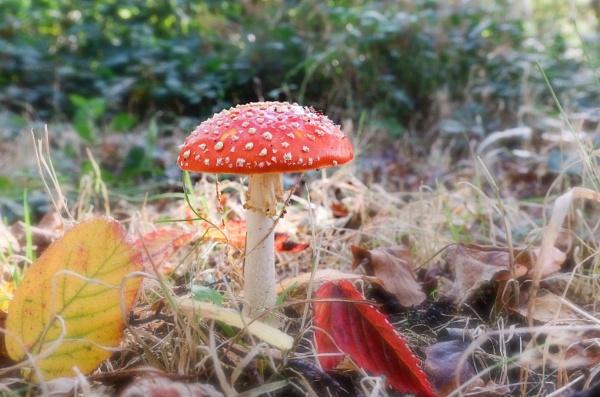 Autumn colours. by 64Peteschoice
