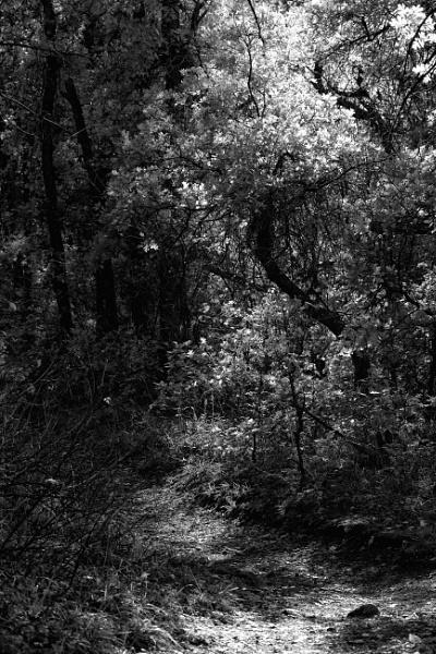 Of autumn by mlseawell
