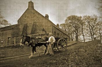 Horse & Cart.