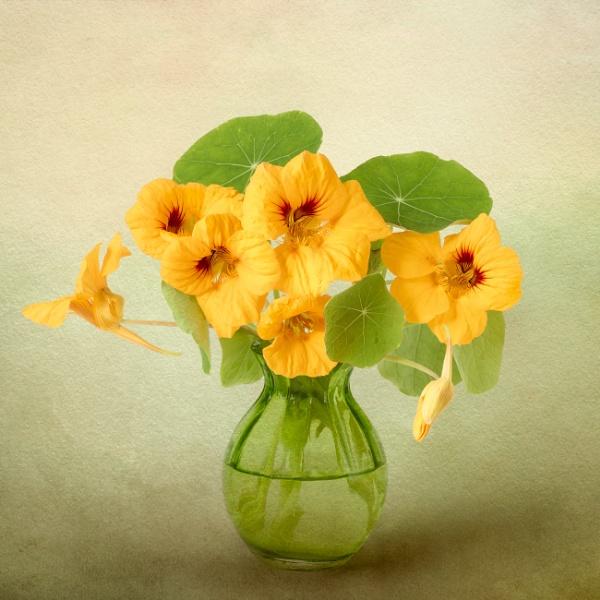 Nasturtiums by flowerpower59