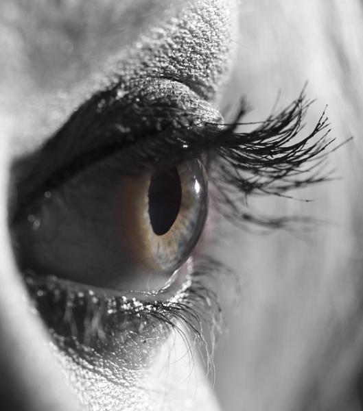 Eye by springfieldphotography