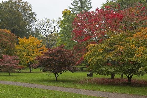 Westonbirt Arboretum- Glos by VincentChristopher