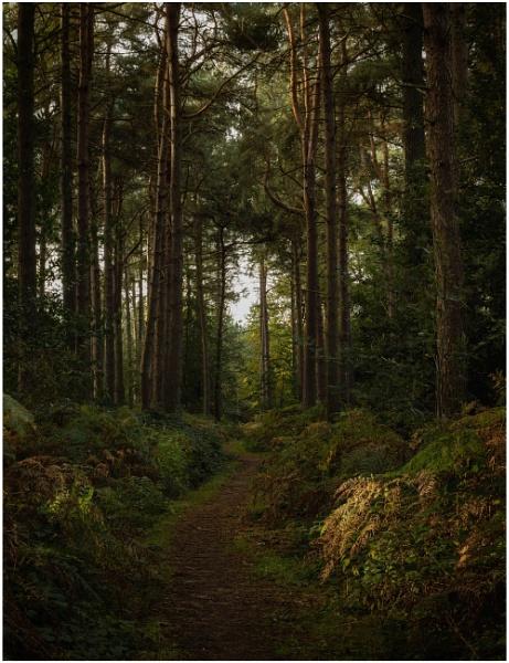 Path through the firs by Carlos9
