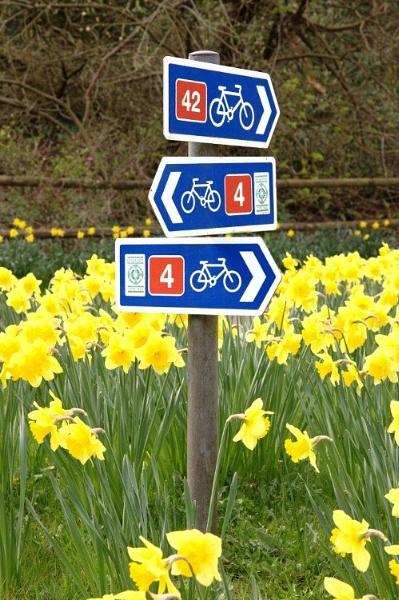 cycling-daffodil.jpg