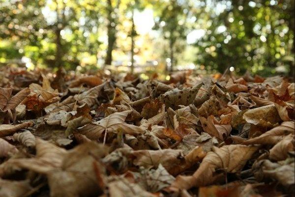 foregound-leaves.jpg