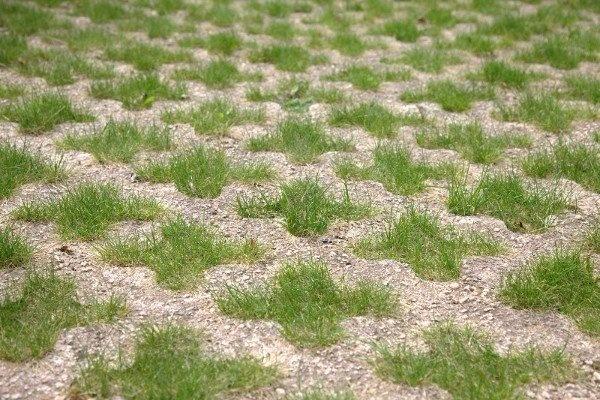 grass-pattern.jpg