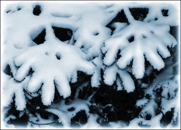 icy-fingers-epz-.jpg