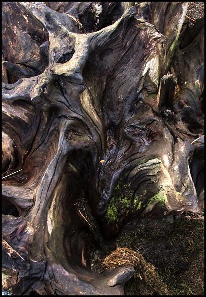 tree-root-a--epz-.jpg