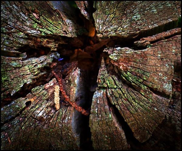 tree-stump--3--epz-.jpg