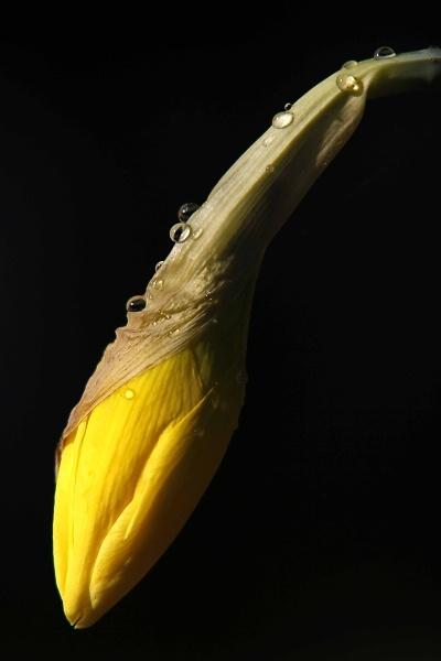 fallen-flower-2.jpg