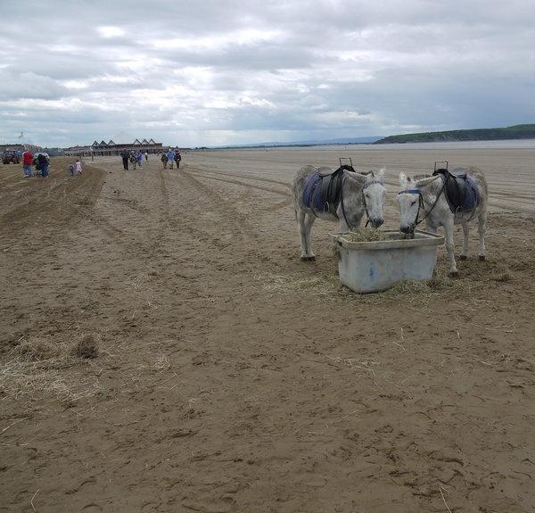 beach-donkeys-.jpg
