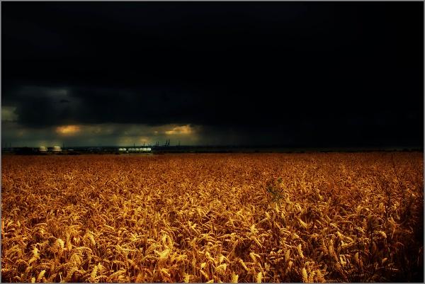 fields--1-of-2-.jpg