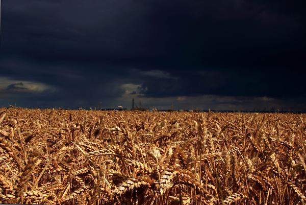 fields--2-of-2-.jpg
