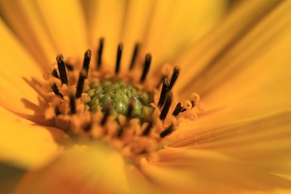 flower-10--1-of-1-.jpg