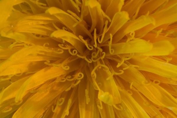 flower-5--1-of-1-.jpg