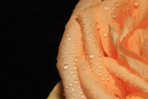 flower-8--1-of-1-.jpg