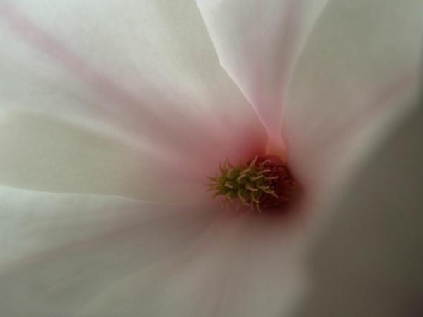 flower-one--1-of-1-.jpg