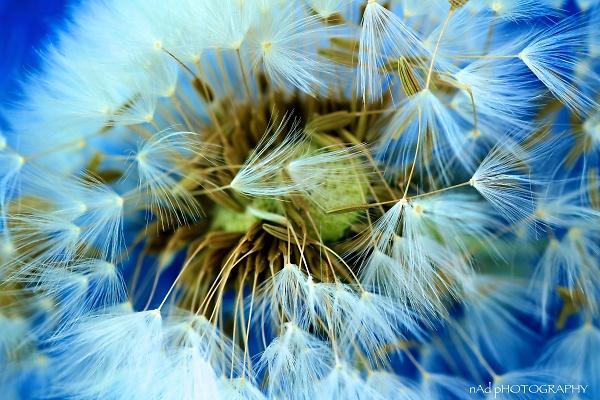 flowers-indoors--1-of-13-.jpg