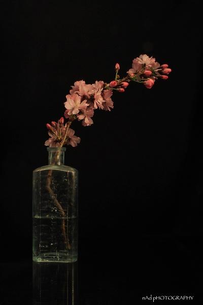 flowers-indoors--11-of-13-.jpg