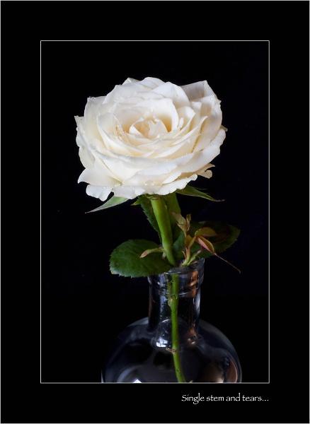 flowers-indoors--4-of-13-.jpg