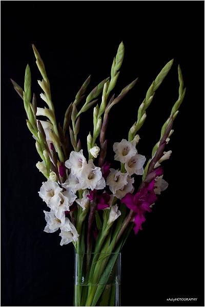 flowers-indoors--6-of-13-.jpg