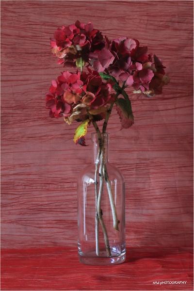 flowers-indoors--7-of-13-.jpg