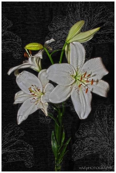 flowers-indoors--9-of-13-.jpg