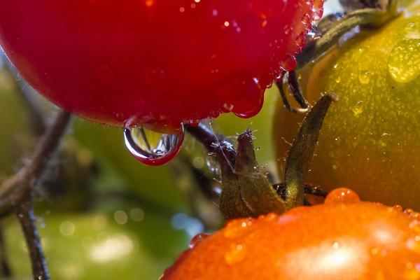 garden--9-of-15-.jpg