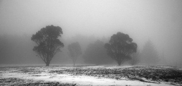 1-oke-trees-in-fog-5-feb-09.jpg