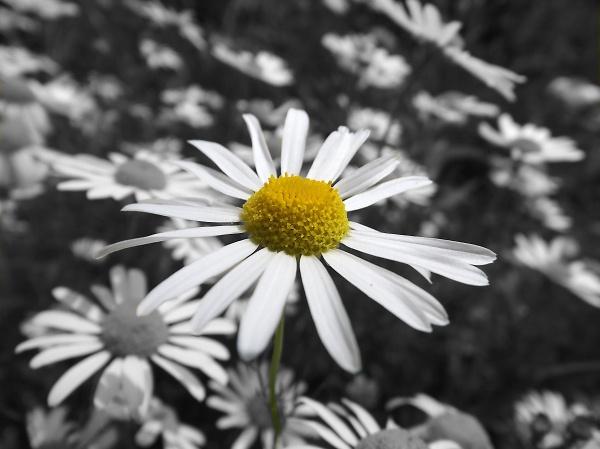 2-daisy-daisy.jpg