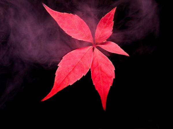 2-red-weed.jpg