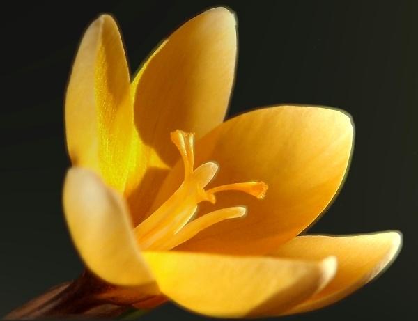 2-spring-flower-cut.jpg