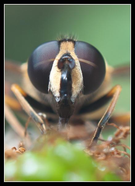 1-hover-fly-2-f.jpg