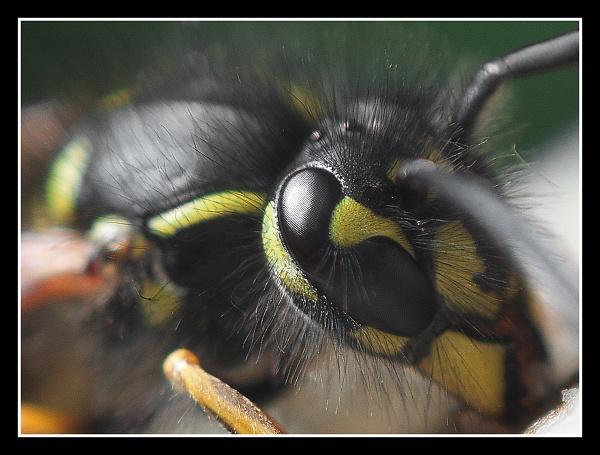 1-wasp-f.jpg