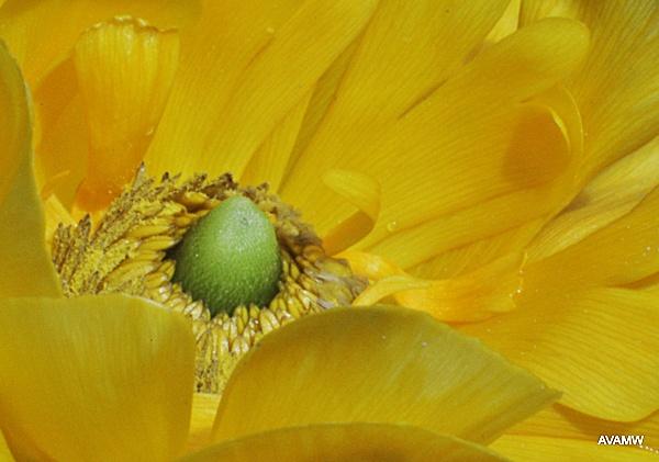 1-yellow2.jpg