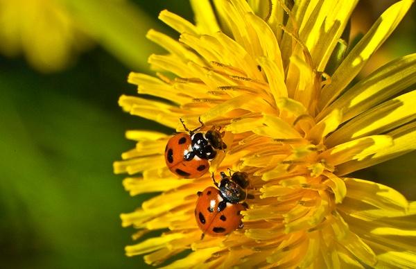 ladybug-3-6966.jpg