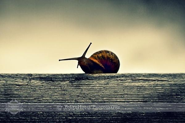 4-snail.jpg