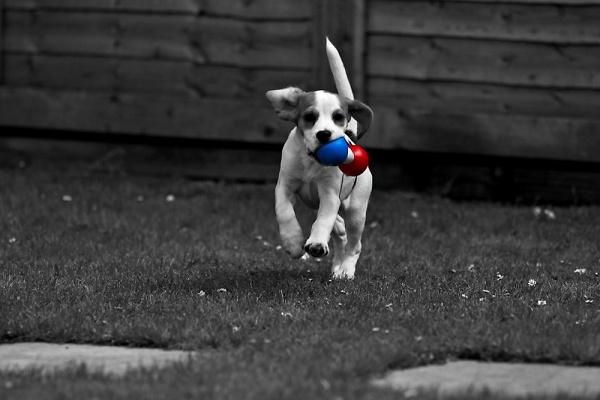 dogs-at-play-michelleyorke-2.jpg